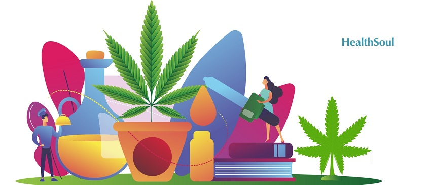 Can CBD oil be extracted from Hennep plants? | HealthSoul