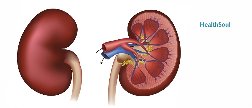 How To Take Good Care of Your Kidneys | HealthSoul