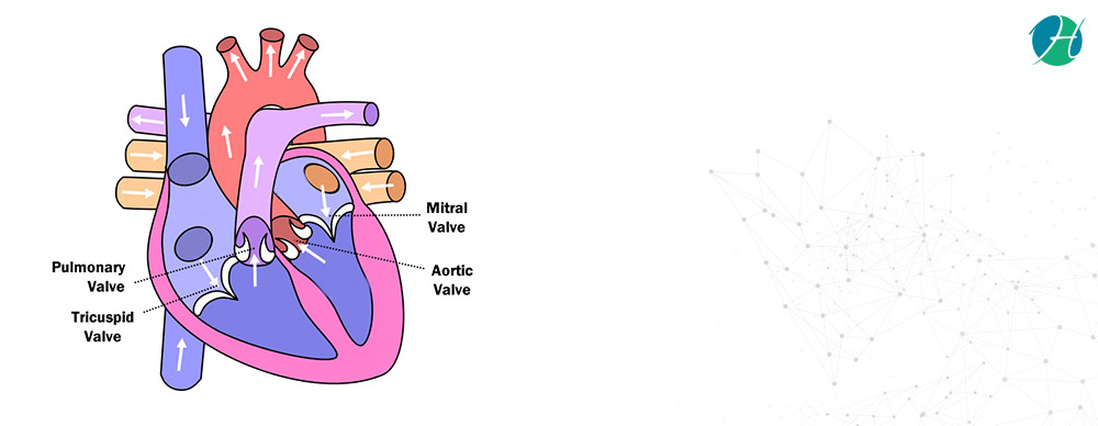Mitral Valve Stenosis: Symptoms and Treatment | HealthSoul