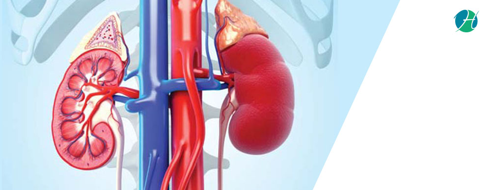 Chronic Kidney Disease: Causes and Management | HealthSoul