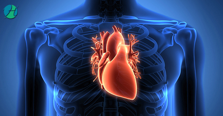 Heart Transplant: Indications and Complications | HealthSoul